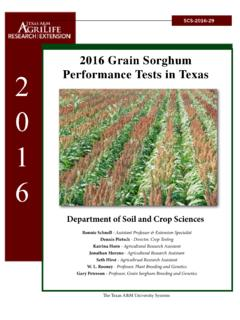 2016 Grain Sorghum Performance Tests in Texas