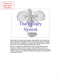 Urinary System Web - Class Videos for Anatomy …