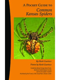 A Pocket Guide to Common Kansas Spiders