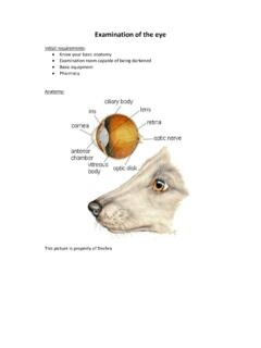 Examination of the eye - Eye Vet