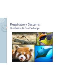 Respiratory Systems: Ventilation & Gas Exchange