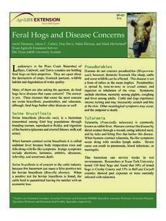 Feral Hogs and Disease Concerns
