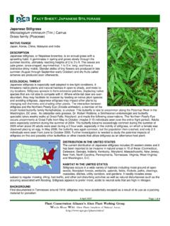 FACT SHEET JAPANESE STILTGRASS - Invasive.Org