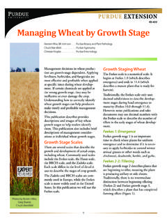 Managing Wheat by Growth Stage - Home - Purdue Extension
