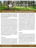 Timber Management: Intermediate Stand Management
