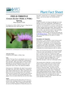 Plant Fact Sheet - USDA PLANTS