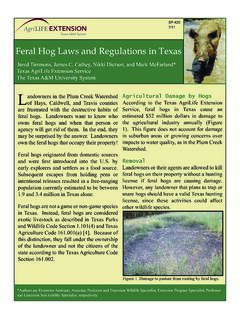 Feral Hog Laws and Regulations in Texas
