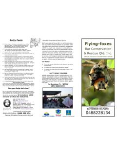 Batty Facts Flying-foxes - Bat rescue Queensland