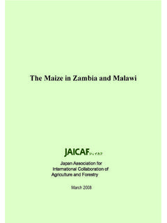 The Maize in Zambia and Malawi - JAICAF