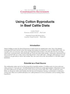 Using Cotton Byproducts in Beef Cattle Diets