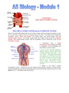 THE CIRCULATORY SYSTEM - BiologyMad