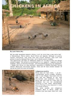 CHICKENS IN AFRICA - Aviculture Europe