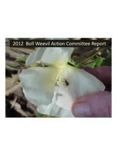 2012 Boll Weevil Action Committee Report - UT Crops