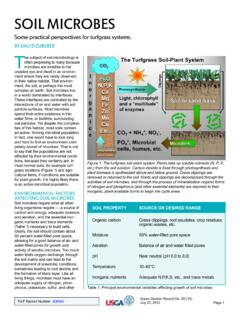 Some practical perspectives for turfgrass systems.