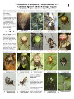 An Introduction to the Spiders of Chicago Wilderness, USA ...