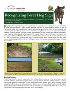 Recognizing Feral Hog Sign - Coping with Feral Hogs