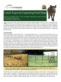 Corral Traps for Capturing Feral Hogs