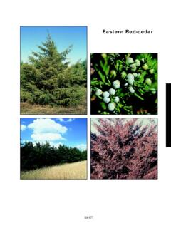Eastern Red-cedar - NDSU Agriculture and Extension